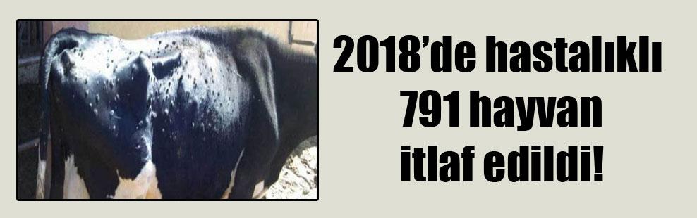 2018'de hastalıklı 791 hayvan itlaf edildi!