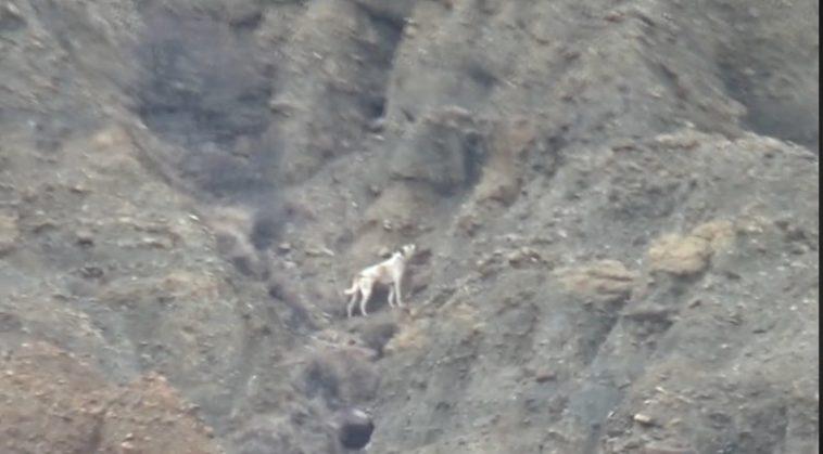 5 gündür kanyonda mahsur kalan köpek için AKUT harekete geçti