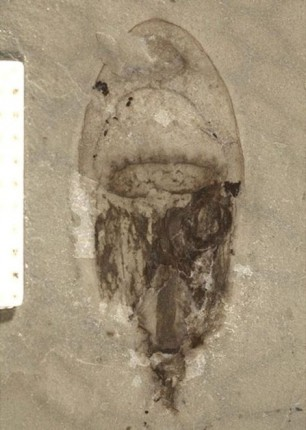 518-milyon-yil-fosil-cin3-471x660
