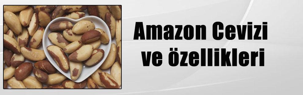 Amazon Cevizi ve özellikleri
