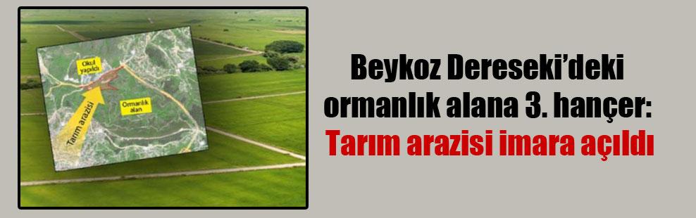 Beykoz Dereseki'deki ormanlık alana 3. hançer: Tarım arazisi imara açıldı