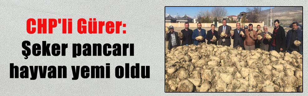 CHP'li Gürer: Şeker pancarı hayvan yemi oldu