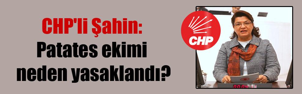 CHP'li Şahin: Patates ekimi neden yasaklandı?