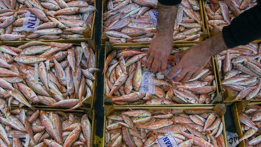 Egeli balıkçılar sezonu bereketli kapatıyor