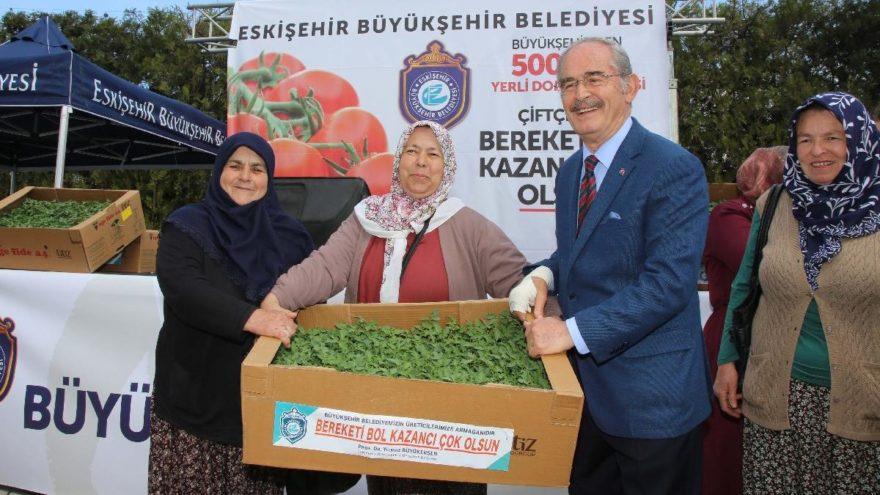 Üreticiye 500 bin domates fidesi