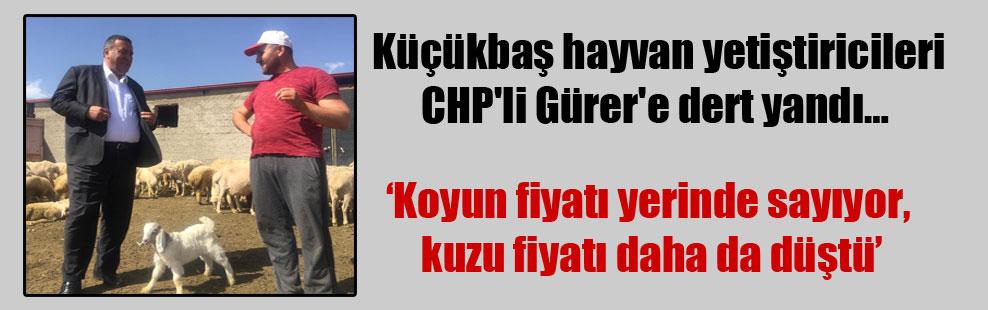 Küçükbaş hayvan yetiştiricileri CHP'li Gürer'e dert yandı…