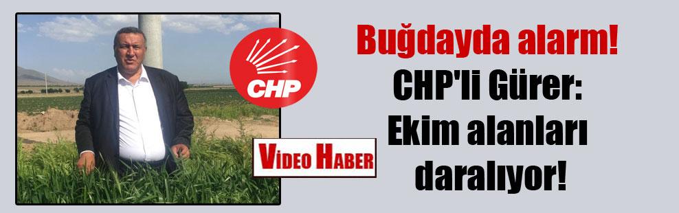 Buğdayda alarm! CHP'li Gürer: Ekim alanları daralıyor!