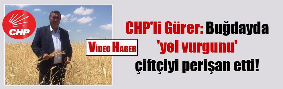 CHP'li Gürer: Buğdayda 'yel vurgunu' çiftçiyi perişan etti!