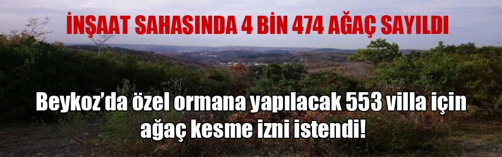 Beykoz'da özel ormana yapılacak 553 villa için ağaç kesme izni istendi!