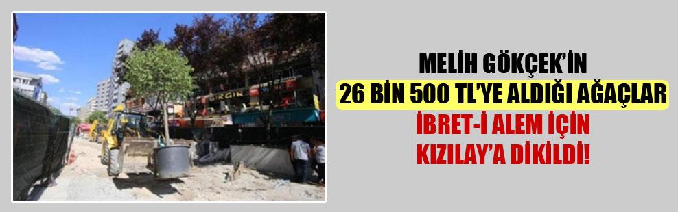 Melih Gökçek'in 26 bin 500 TL'ye aldığı ağaçlar ibret-i alem için Kızılay'a dikildi!