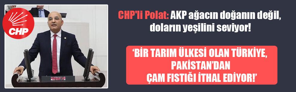 CHP'li Polat: AKP ağacın doğanın değil, doların yeşilini seviyor!