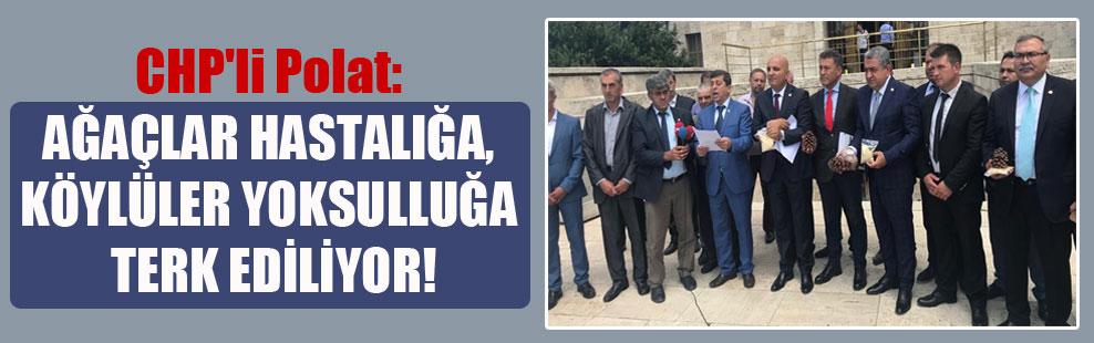 CHP'li Polat: Ağaçlar hastalığa, köylüler yoksulluğa terk ediliyor!