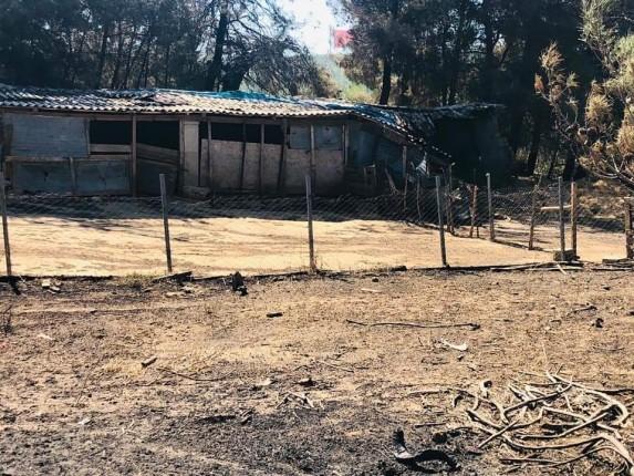 Gelibolu Yarımadası Orman Yangını (4)