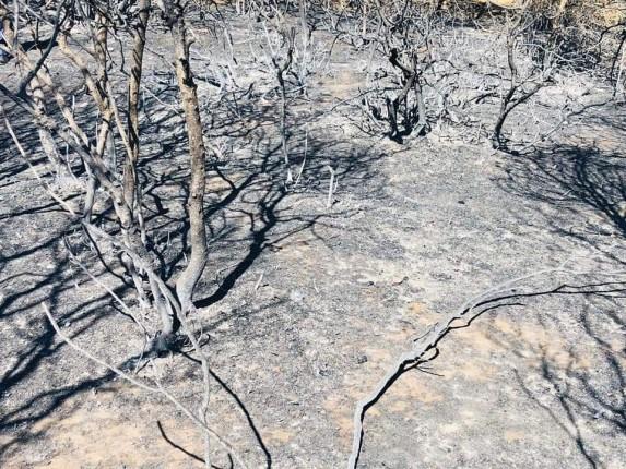 Gelibolu Yarımadası Orman Yangını (6)