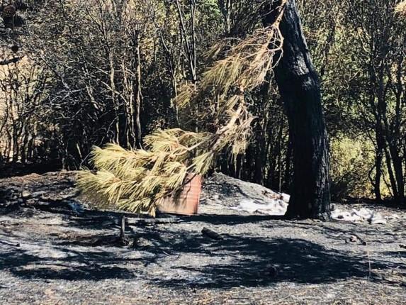 Gelibolu Yarımadası Orman Yangını (7)
