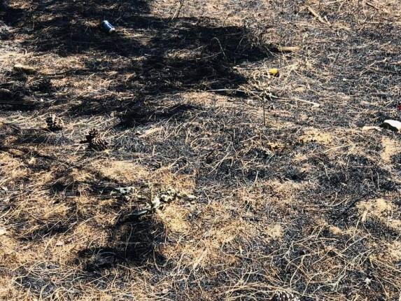 Gelibolu Yarımadası Orman Yangını (8)