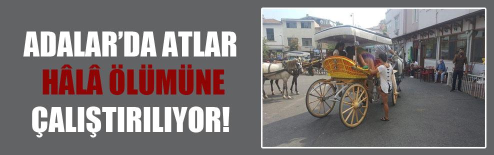 Adalar'da atlar hâlâ ölümüne çalıştırılıyor!