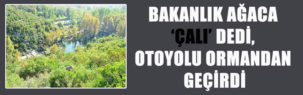 BAKANLIK AĞACA 'ÇALI' DEDİ, OTOYOLU ORMANDAN GEÇİRDİ