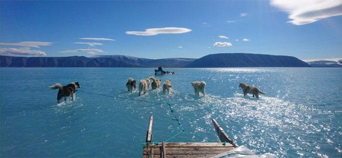 WSJ: Trump, Grönland'ı Danimarka'dan satın almak istiyor