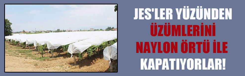 JES'ler yüzünden üzümlerini naylon örtü ile kapatıyorlar!
