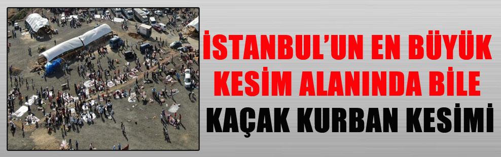 İSTANBUL'UN EN BÜYÜK KESİM ALANINDA BİLE KAÇAK KURBAN KESİMİ