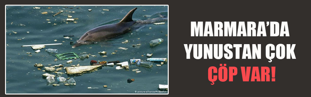 Marmara'da yunustan çok çöp var!