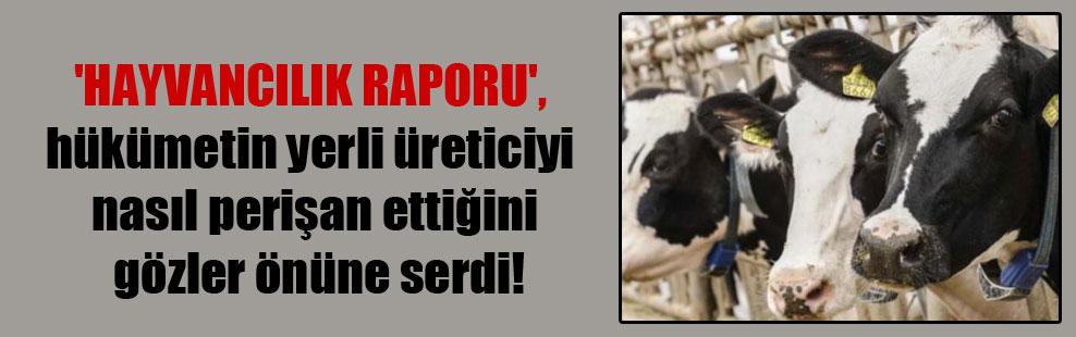 'Hayvancılık Raporu', hükümetin yerli üreticiyi nasıl perişan ettiğini gözler önüne serdi!