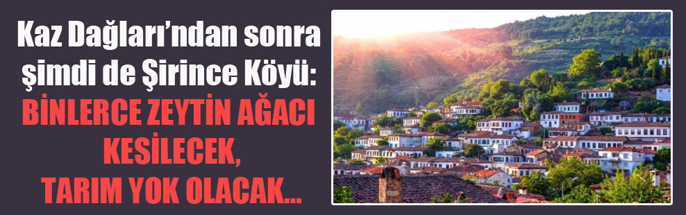 Kaz Dağları'ndan sonra şimdi de Şirince Köyü: Binlerce zeytin ağacı kesilecek tarım yok olacak…