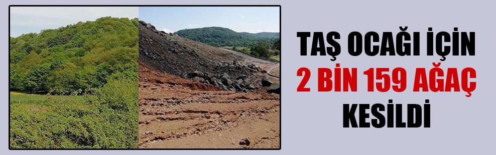 Taş ocağı için 2 bin 159 ağaç kesildi