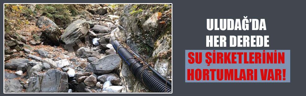 Uludağ'da her derede su şirketlerinin hortumları var!