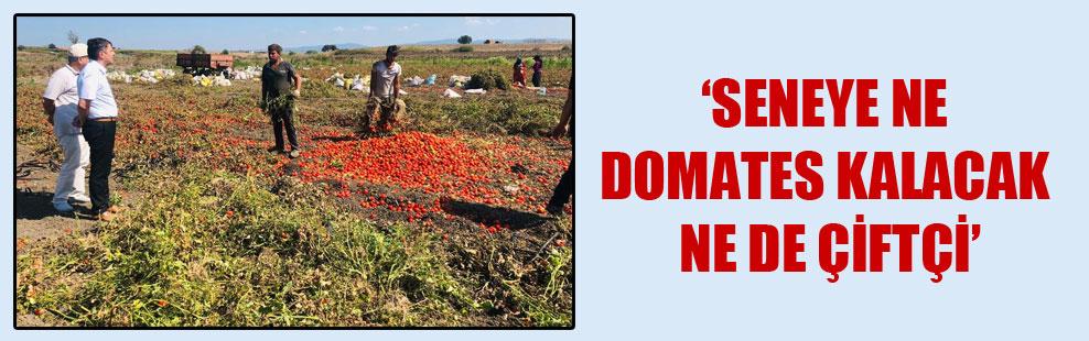 'Seneye ne domates kalacak ne de çiftçi'