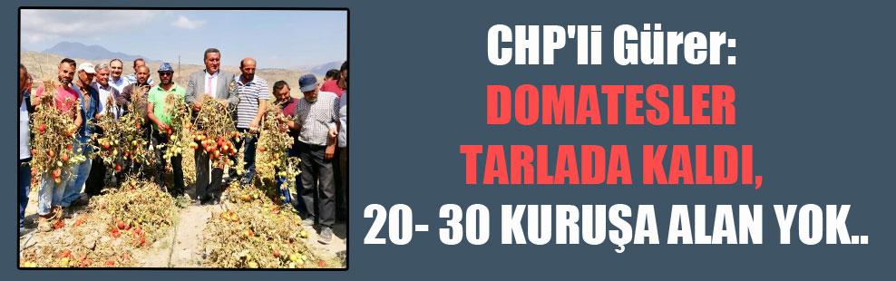 CHP'li Gürer: Domatesler tarlada kaldı, 20- 30 kuruşa alan yok..