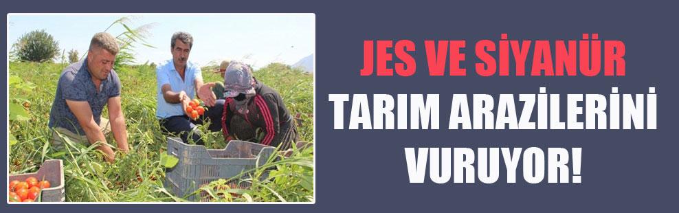 JES ve siyanür tarım arazilerini vuruyor!