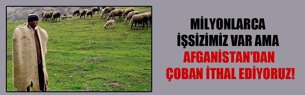 Milyonlarca işsizimiz var ama Afganistan'dan çoban ithal ediyoruz!