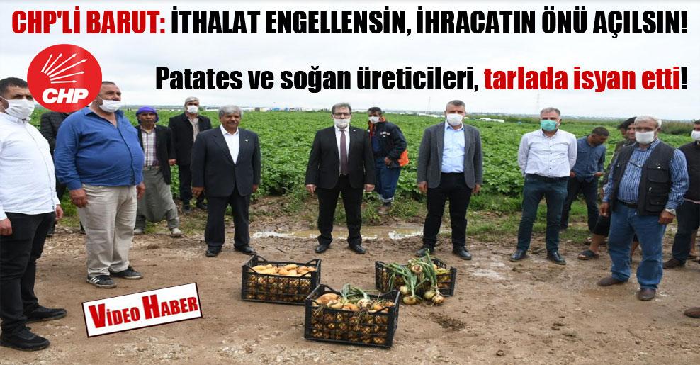 Patates ve soğan üreticileri, tarlada isyan etti! CHP'li Barut: İthalat engellensin, ihracatın önü açılsın!