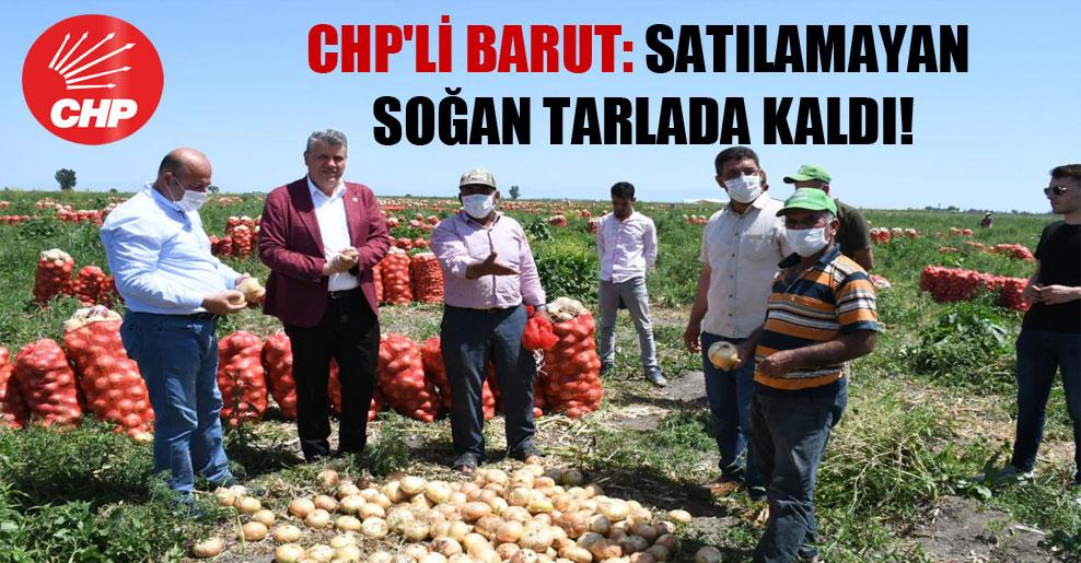 CHP'li Barut: Satılamayan soğan tarlada kaldı!