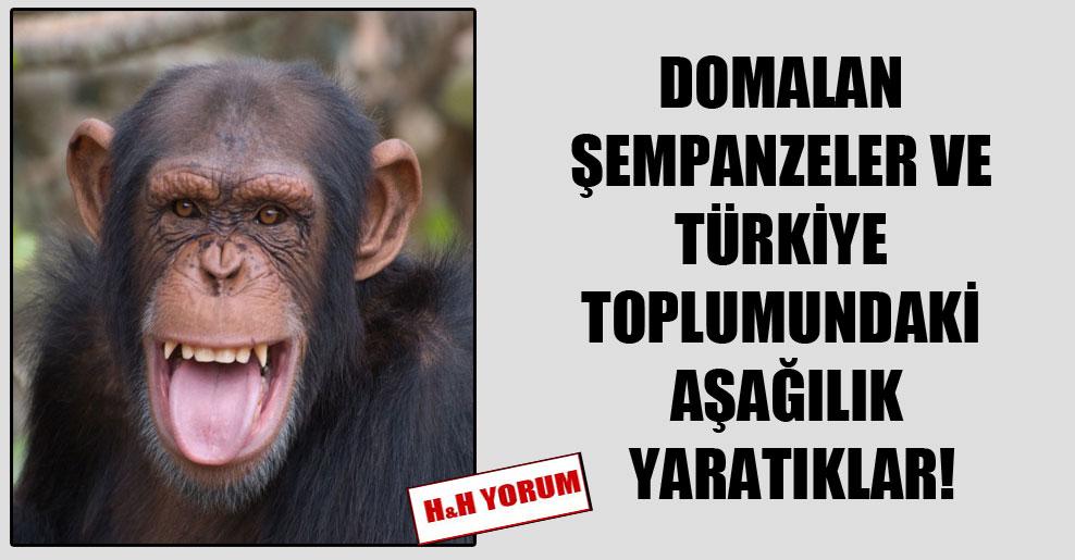 Domalan şempanzeler ve Türkiye toplumundaki aşağılık yaratıklar!