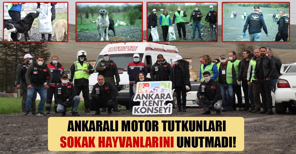 Ankaralı motor tutkunları sokak hayvanlarını unutmadı!