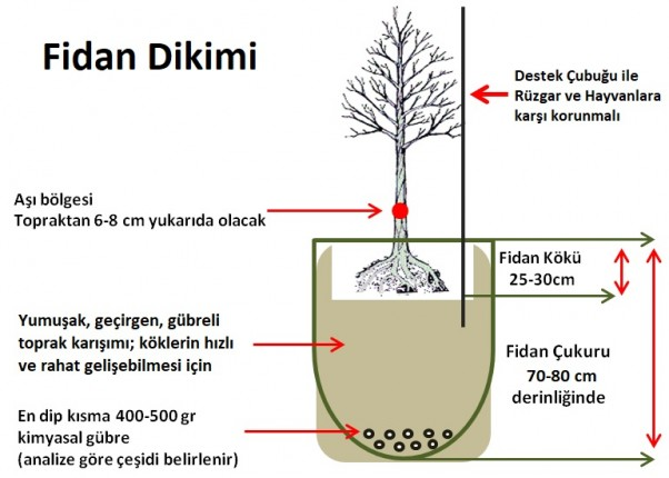 fidan1