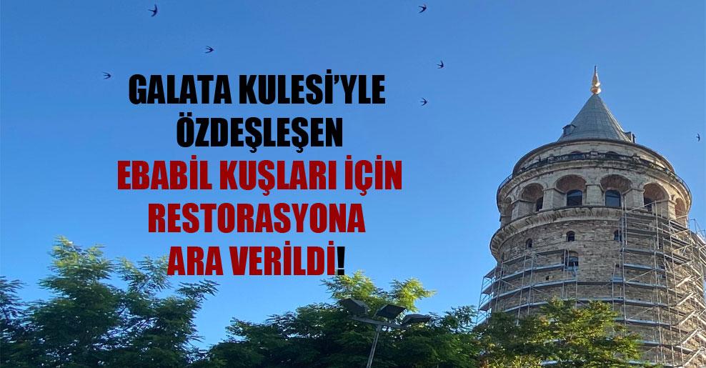 Galata Kulesi'yle özdeşleşen ebabil kuşları için restorasyona ara verildi!