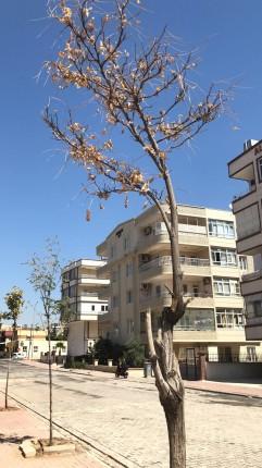 kuruyan ağaç 2