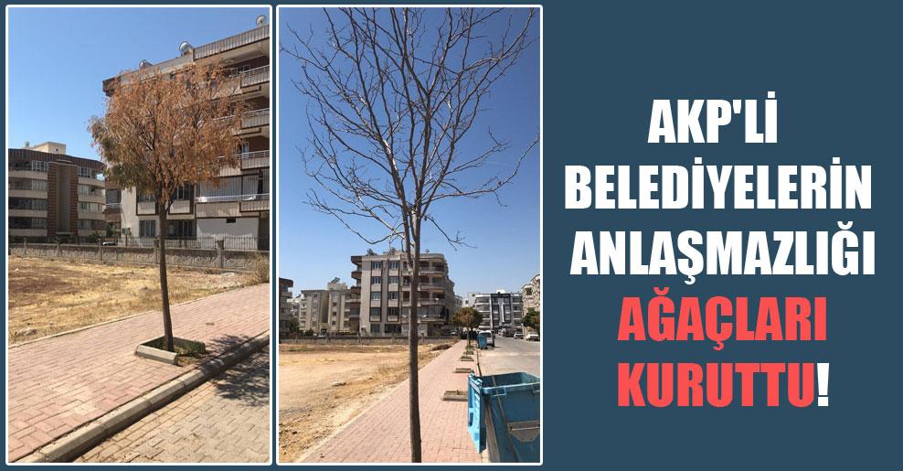 AKP'li belediyelerin anlaşmazlığı ağaçları kuruttu!