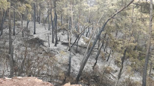Adrasan Orman Yangını 1 20.09.2020