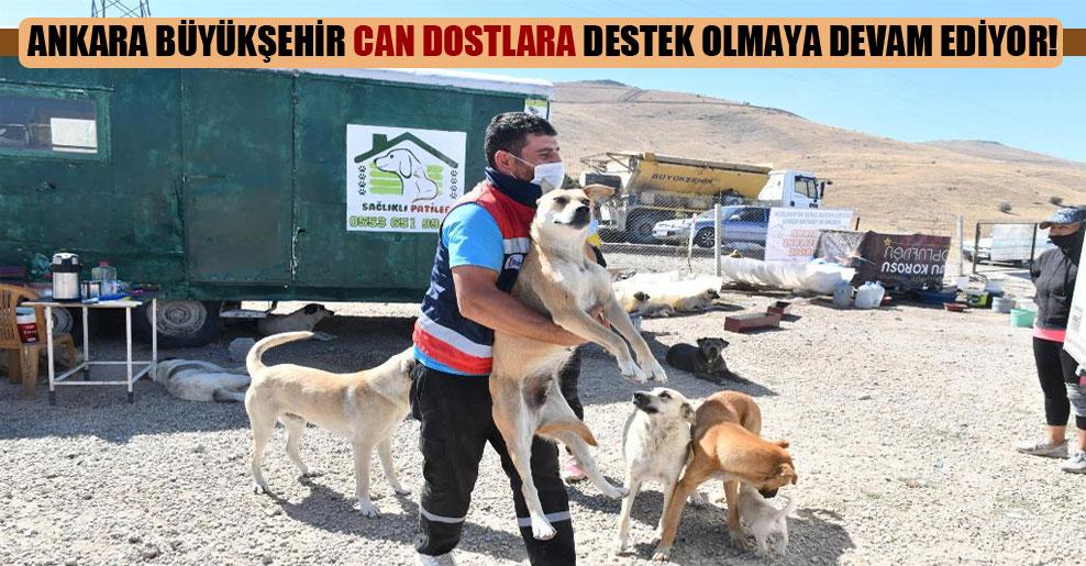 Ankara Büyükşehir can dostlara destek olmaya devam ediyor!