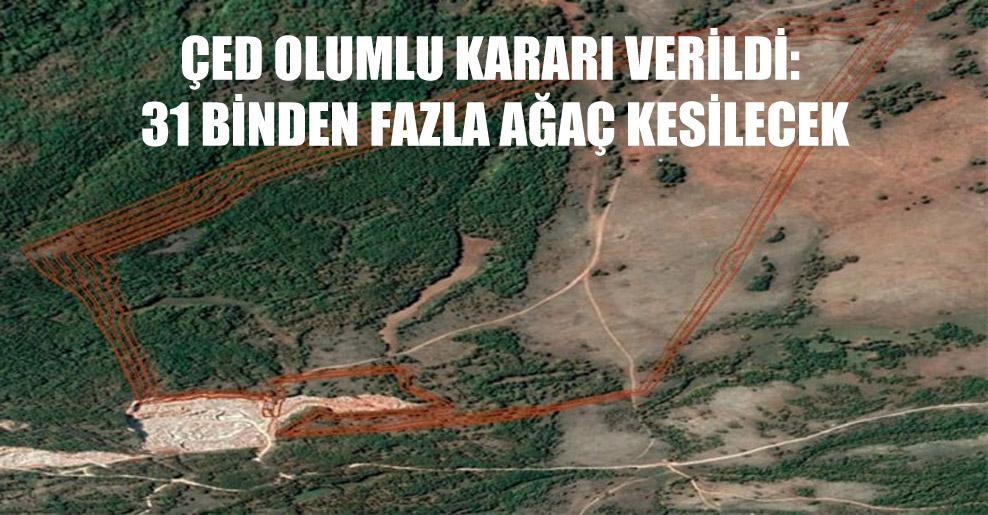 ÇED olumlu kararı verildi: 31 binden fazla ağaç kesilecek