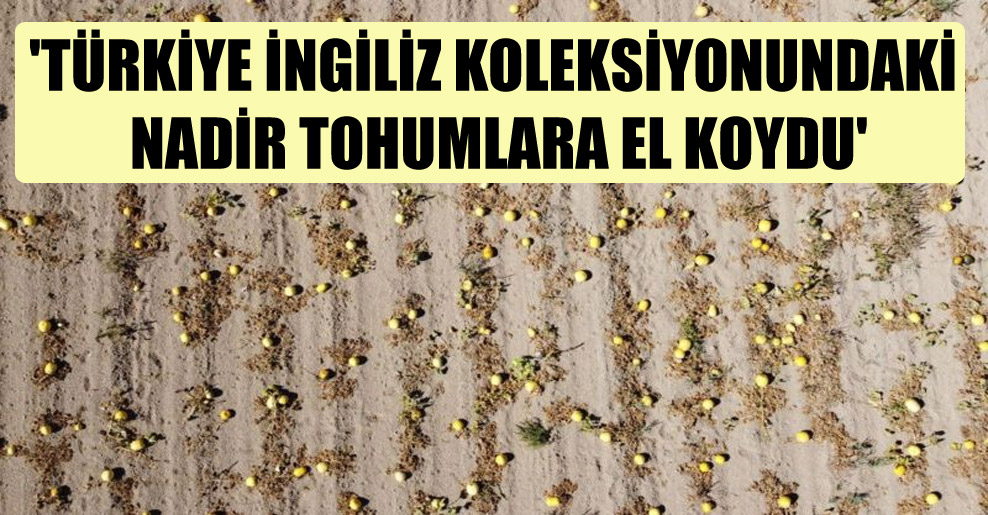 'Türkiye İngiliz koleksiyonundaki nadir tohumlara el koydu'