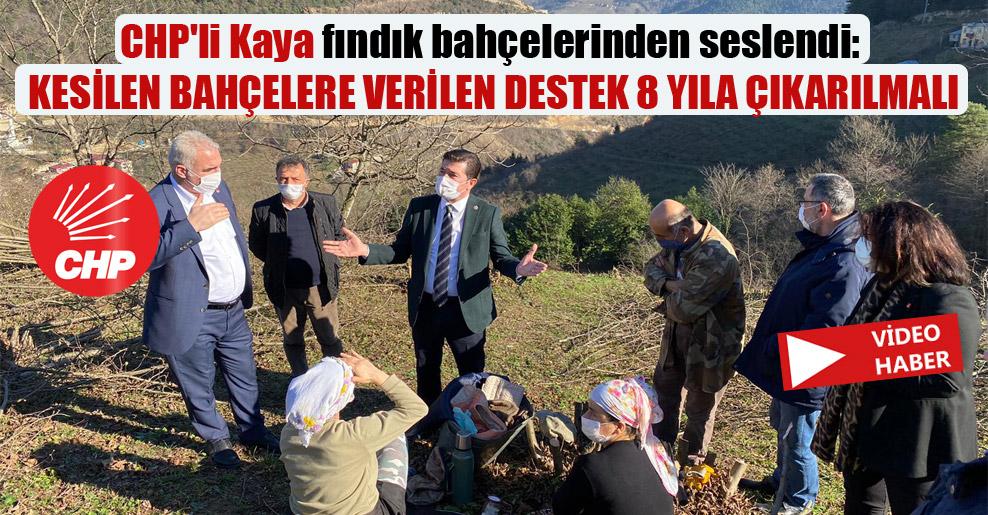 CHP'li Kaya fındık bahçelerinden seslendi: Kesilen bahçelere verilen destek 8 yıla çıkarılmalı