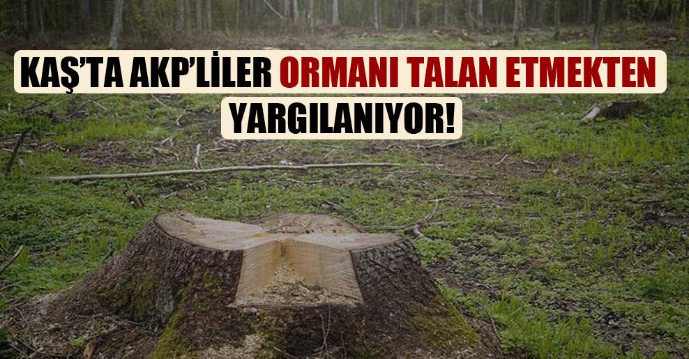 Kaş'ta AKP'liler ormanı talan etmekten yargılanıyor!