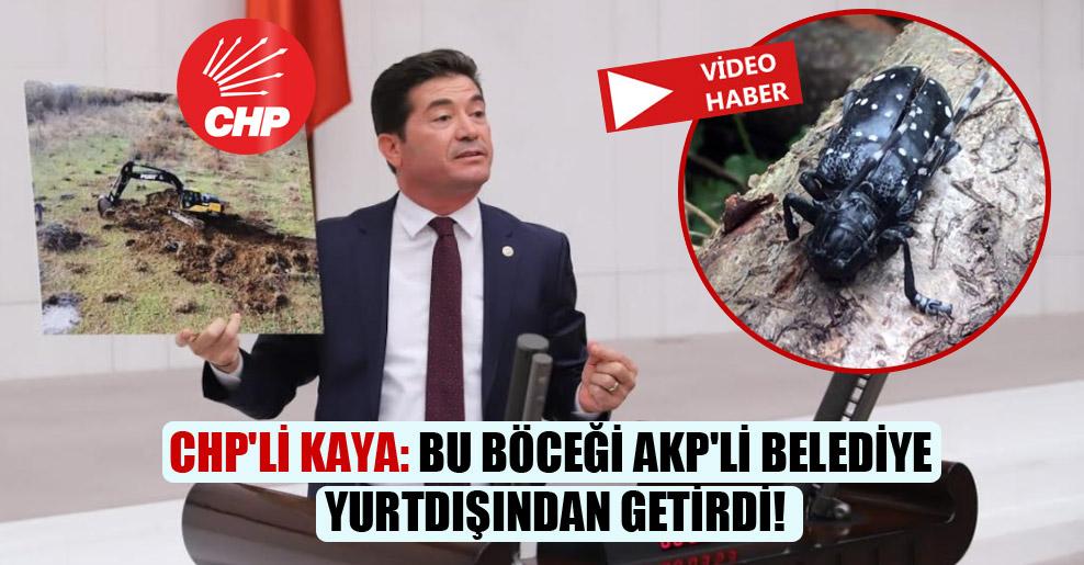 CHP'li Kaya: Bu böceği AKP'li belediye yurtdışından getirdi!