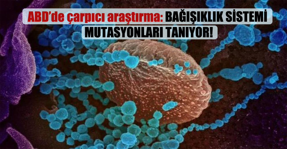 ABD'de çarpıcı araştırma: Bağışıklık sistemi mutasyonları tanıyor!